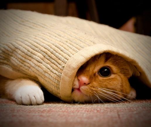 Kako očistiti tvrdokorne mrlje na tepihu? - Kućanski Poslovi